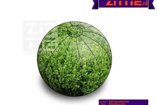 Zittie_Zitbal_SVB_Buxus_v01